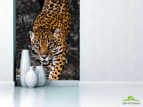 обои Животные Фотообои леопард крадётся