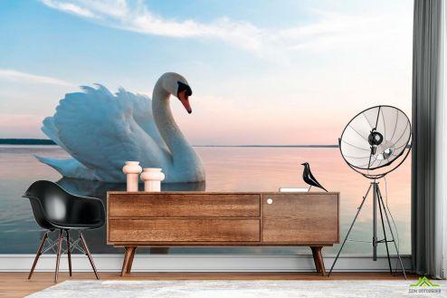 Птицы  Фотообои Лебедь на пруду
