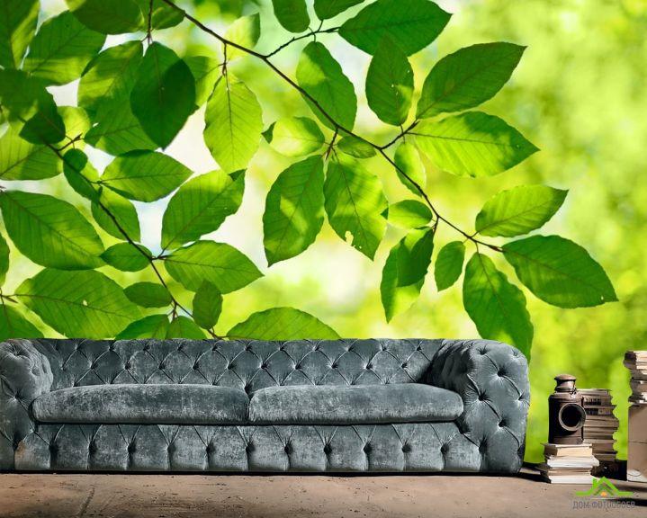Фотообои зеленые листья на дереве