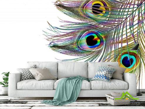 обои перья Фотообои Перья павлина