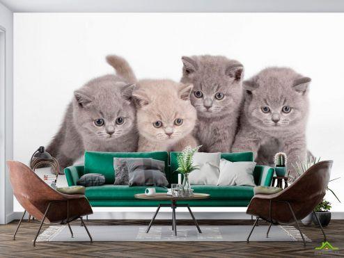 Животные Фотообои Котята