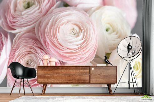 Фотообои Цветы по выгодной цене Фотообои Розовые рунункюлусы
