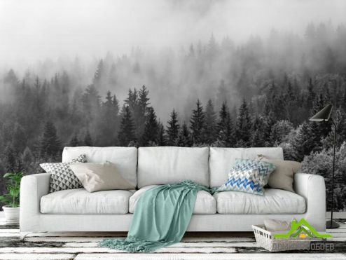 Черно-белые  Фотообои лес