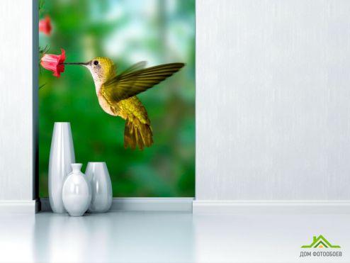 обои Птицы  Фотообои Колибри
