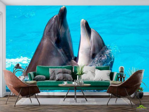 Дельфины Фотообои Два дельфина