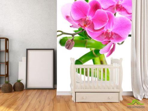 обои Бамбук  Фотообои Орхидея и бамбук