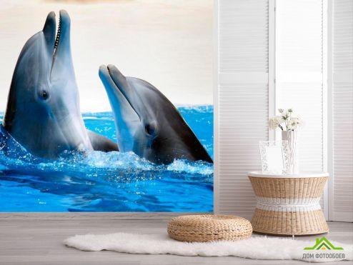 обои Животные Фотообои Общение дельфинов