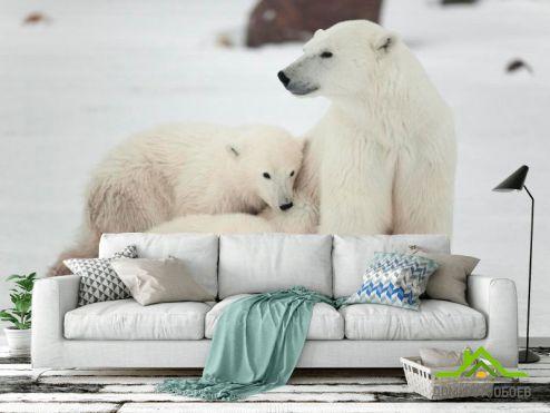 обои Медведи Фотообои Семья белых медведей