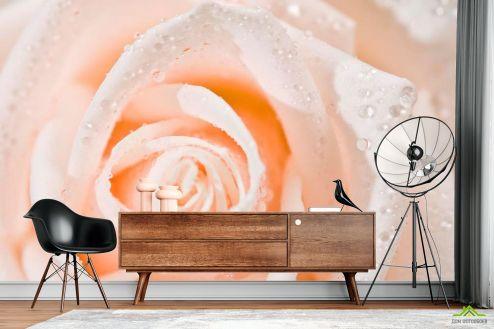 Розовые  Фотообои Роза