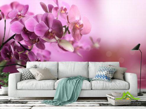 Орхидеи Фотообои розовые орхидеи над водой