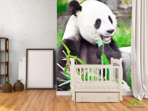 обои Панды Фотообои Отдыхающая панда