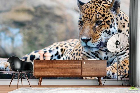 Гепарды Фотообои Гепард на отдыхе