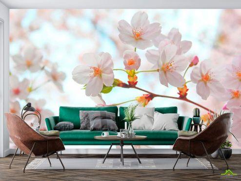 Абрикос Фотообои Цветет абрикос весной