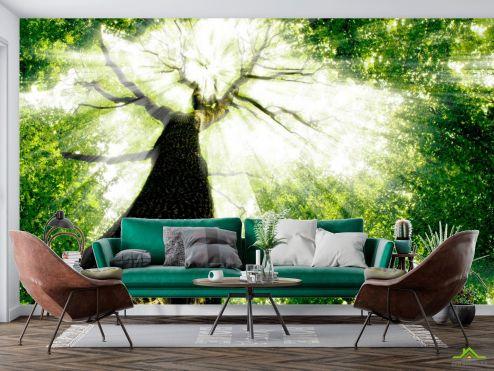 Природа Фотообои Дерево, свет