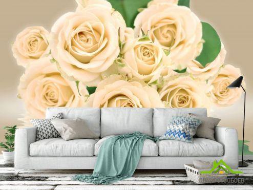 обои Цветы Фотообои Бежевые розы