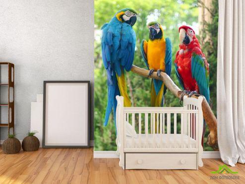 обои Животные Фотообои три попугая
