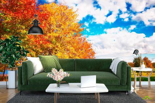 Оранжевые  Фотообои Осень, деревья