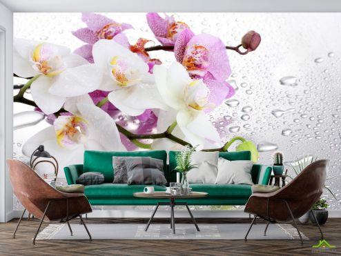 Орхидеи Фотообои орхидеи на фоне с каплями