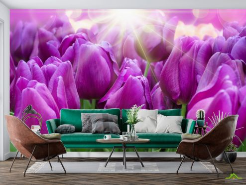 Тюльпаны Фотообои фиолетовые тюльпаны купить