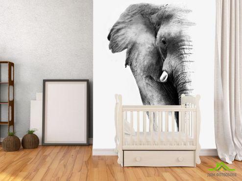 Слоны Фотообои Слон