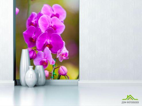 Орхидеи Фотообои ветка орхидеи