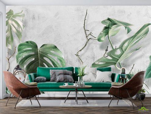 тропические листья Фотообои Листья Монстеры