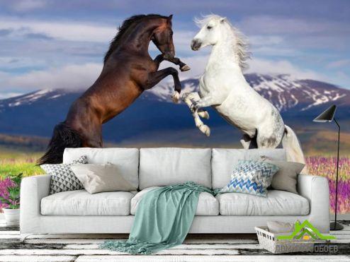 обои Животные Фотообои белая и черная лошадь