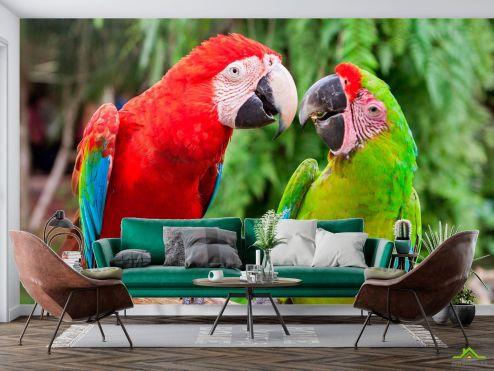 Животные Фотообои Общение попугаев