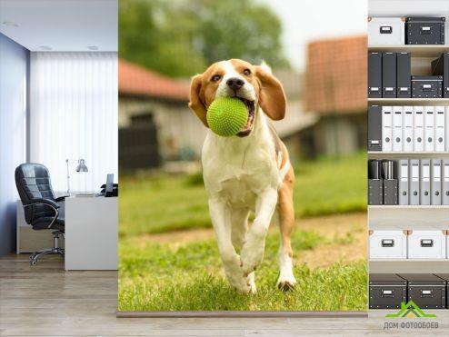 обои Животные Фотообои собака с мячиком