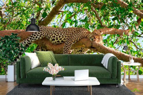 Гепарды Фотообои Спящий гепард