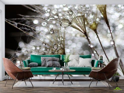 Одуванчики Фотообои белый одуванчик с росой