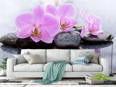 обои Цветы Фотообои орхидея на камне