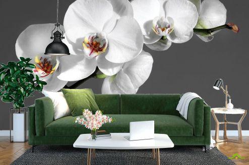 Орхидеи Фотообои белая орхидея на сером фоне