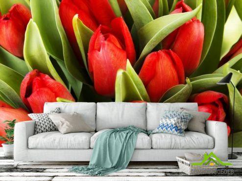 Тюльпаны Фотообои красные тюльпаны