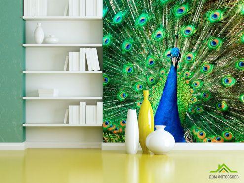 Птицы  Фотообои Прекрасный павлин