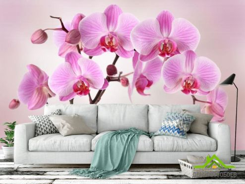 обои Орхидеи Фотообои сиреневые орхидеи из воды