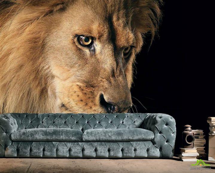 Фотообои морда льва