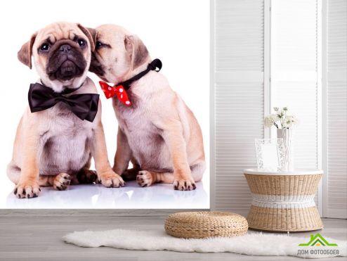 обои Собаки Фотообои Щенки в бабочках