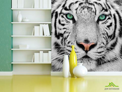 Тигры Фотообои Красавец тигр