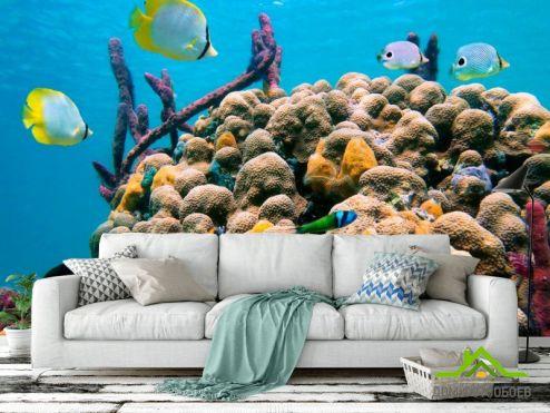 Море Фотообои Коралловый риф