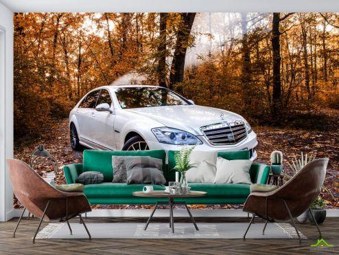 Транспорт Фотообои белая машина в лесу