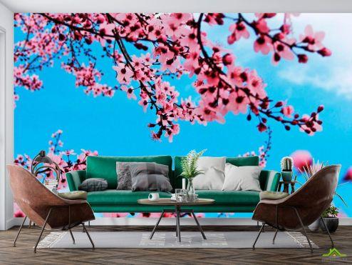 Вишня Фотообои Цветущая весной вишня