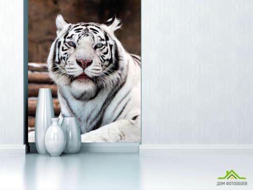 обои Животные Фотообои Белый тигр