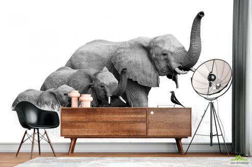 Черно-белые  Фотообои  слоны