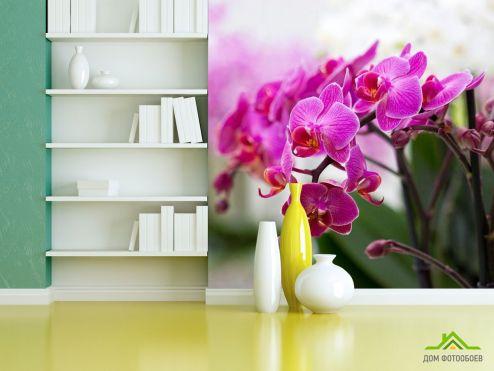 обои Орхидеи Фотообои Орхидеи соцветие