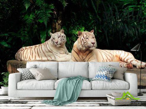 Тигры Фотообои Семейство белых тигров