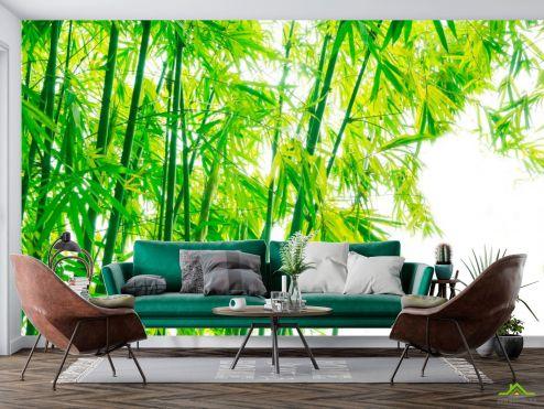 Фотообои Природа по выгодной цене Фотообои Детки, бамбук