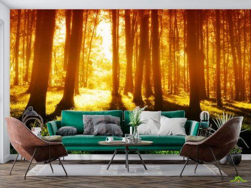 Фотообои Природа по выгодной цене Фотообои утро в лесу