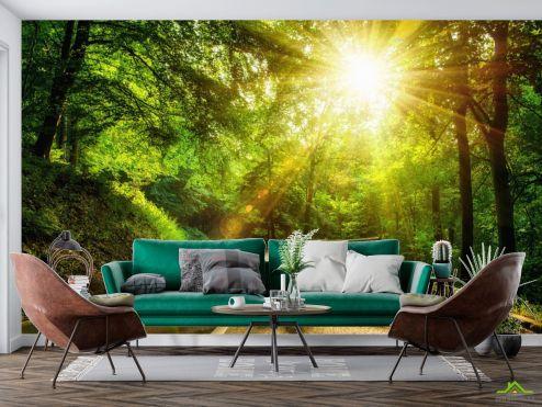 Фотообои Природа по выгодной цене Фотообои Восход в лесу