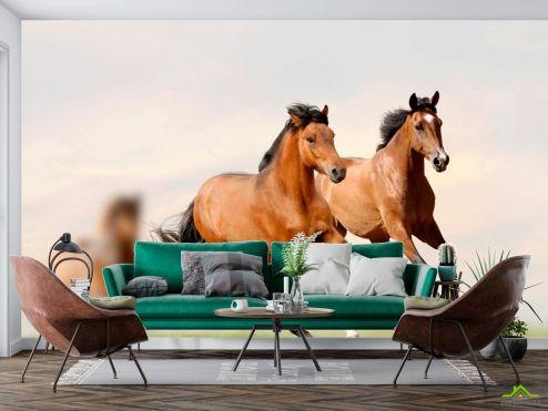 Животные Фотообои Скачущие кони